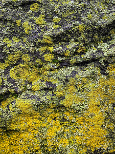 How cool is this? Yellowish/greenish moss embedded in the old stone wall along Beechwood Boulevard.