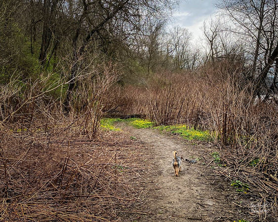 Herbie winds his way down the dirt path towards the Carrie Furnace.