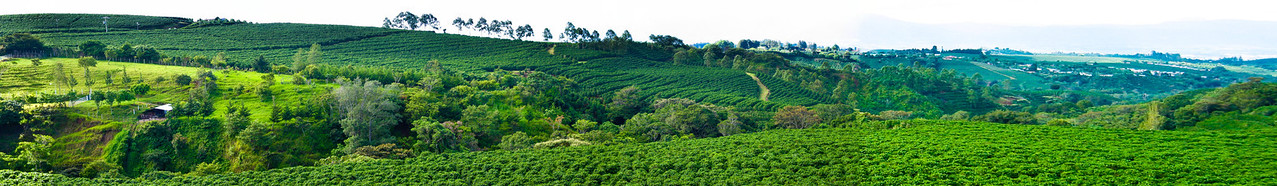 Costa Rica - Coffee Fields