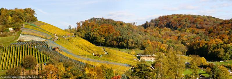 Vinyard near Birmensdorf