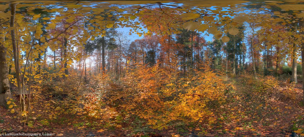 Forest at Würenlingen