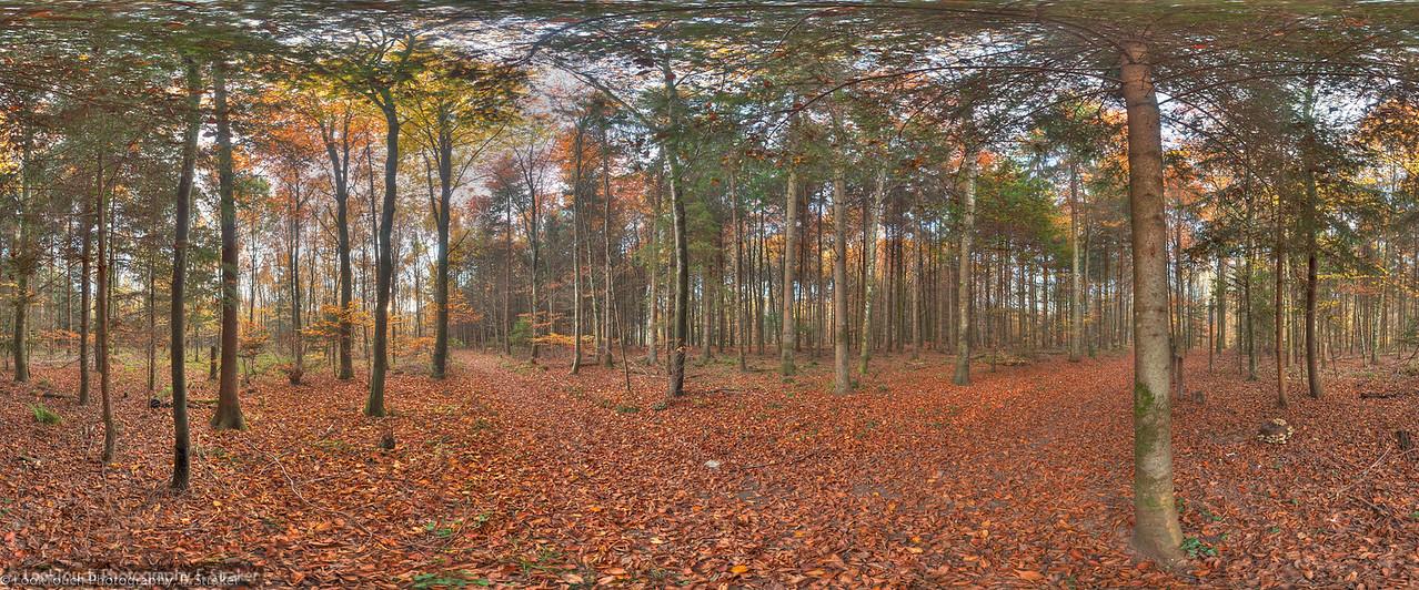 Forest at Würenlingen<br /> (Grenzpunkt)