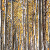 Aspen<br /> <br /> Aspens Panoramic 1