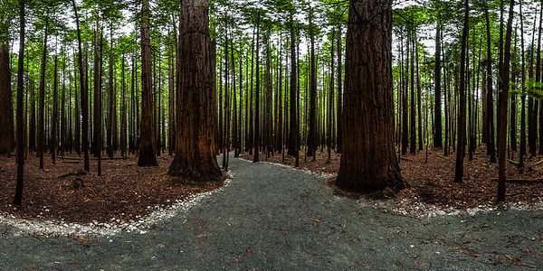 Redwood Memorial Grove Track