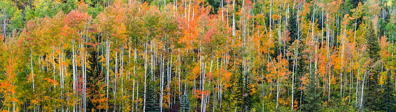 Aspen Panorama Near Purgatory Ski Area, Colorado