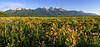 "Grand Teton National Park - Morning Flowers <BR><BR>Want to buy a print of this image?  Click <a href=""http://www.langfordphotography.com/For-Sale/New-Site-Panormaics/9004552_h7zw9H"">Here</a>!"