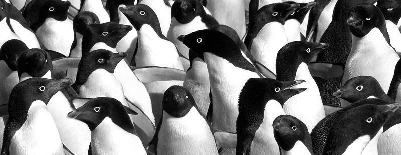 Traffic Jam  Antarctica