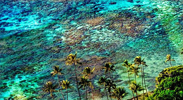 Tropical Postcard          Oahu, Hawaii