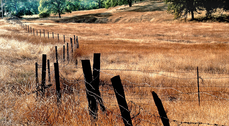 Fields of Gold   near Paso Robles, California
