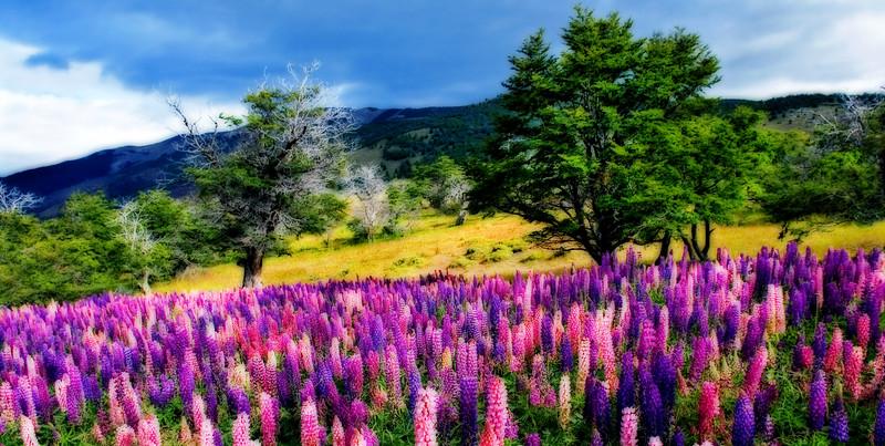 Dreaming Of Patagonia*