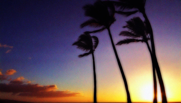 palm tree sunset, Hawaii