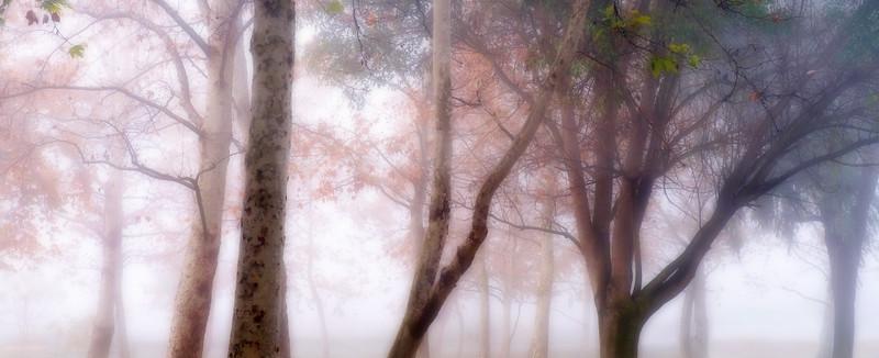 Autumn White*