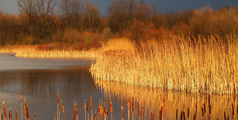 Golden light on Quakertown marsh before a storm