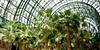 Palms in atrium of World Trade Center, NYC