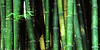 Bamboo Graffiti seen near the Three Poets site on the way to Emei Shan; Sichuan, China