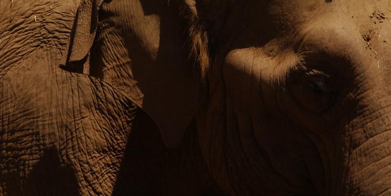 Elephant in San Diego Zoo