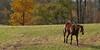 Horse on autumn day in Springtown