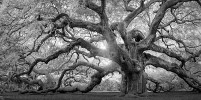 Angel Oak Monochrome