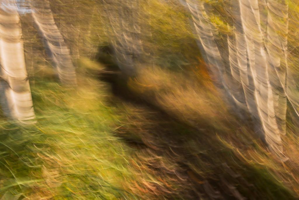 Whirlwind / Tourbillon