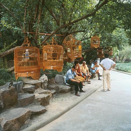 1) Birds in Park