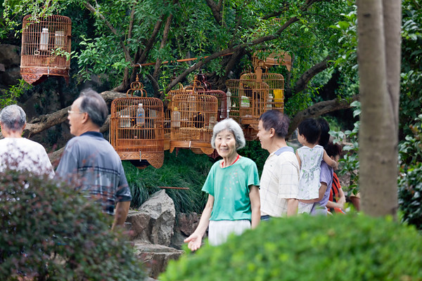 6) Bird Cages 2