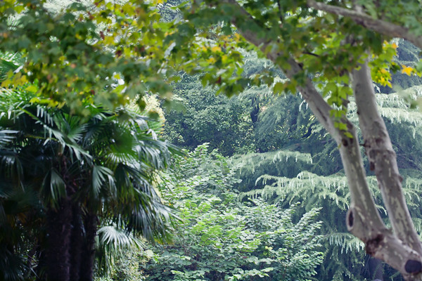 2) Forest in the Park
