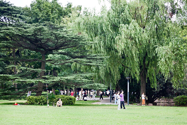 24) Park Trees 2