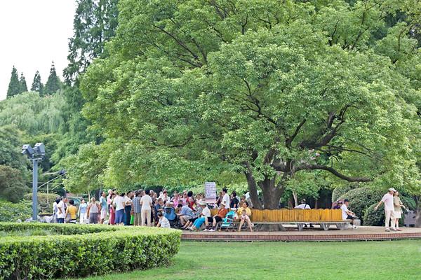 7) Group Under tree