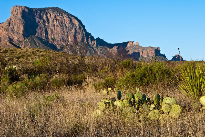 Meadow with grass and cactus in view of the Chisos Mountains in Big Bend National Park in Texas.