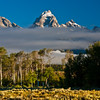 Low lying clouds and fog wreathe the Grand Tetons mountain range in early morning light. This mountain range, the youngest of the Rocky Mountain ranges, is most often viewed in the Grand Tetons National Park in Wyoming,