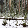 Snow in September in Yellowstone National Park in Wyoming.