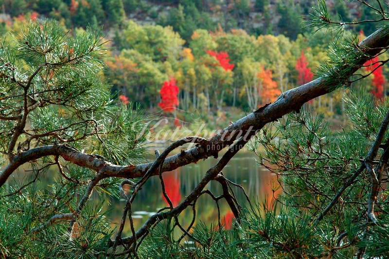 Autumn scene in Acadia National Park, Maine