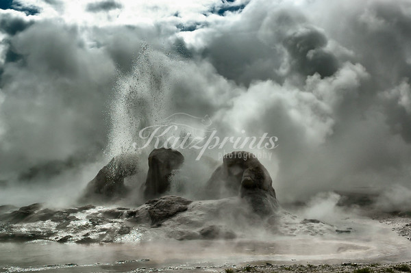 Grotto Geyser in the Upper Geyser Basin of Yellowstone erupts in a plume of steam.