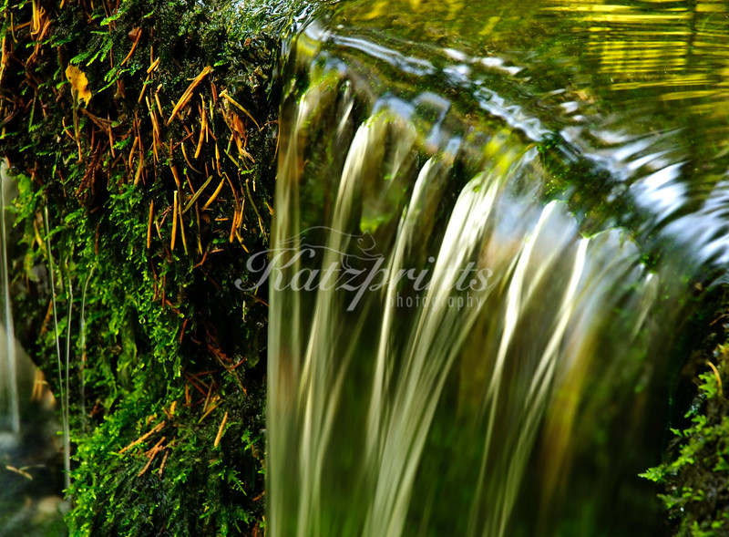 A close-up of the pretty Fern Spring in Yosemite National Park shows all types of shades of green.