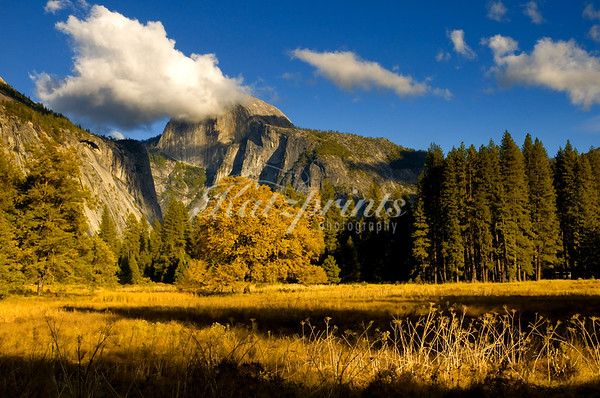 Cook's Meadow Fall