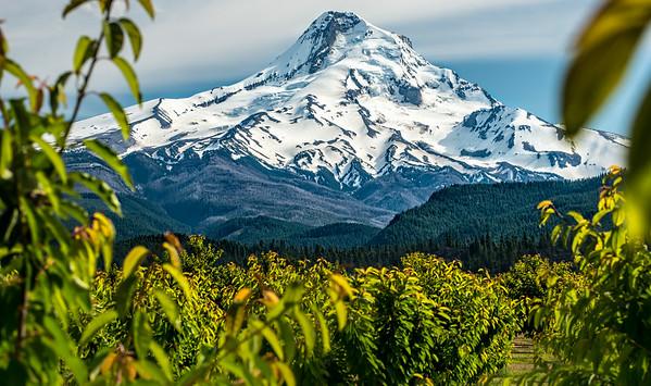Mt Hood & lush lowlands
