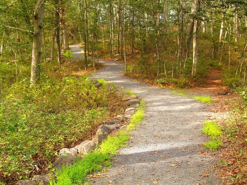 Rhode Island Woods 1 -- Original Photo