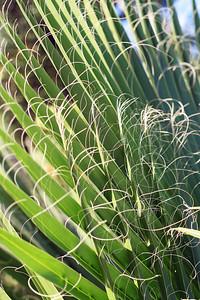 9752 Palm Fern