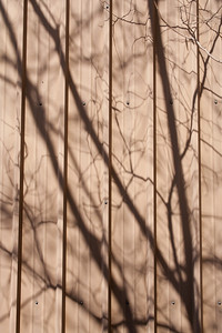 Tree shadow in Fremont