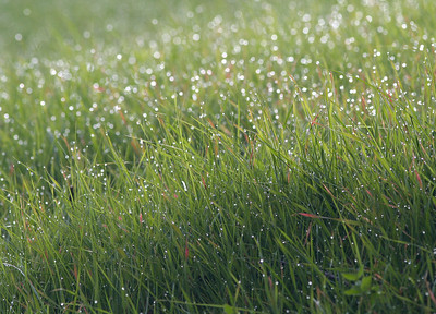 Water drops on backlit grass at Garin Park, Hayward, CA