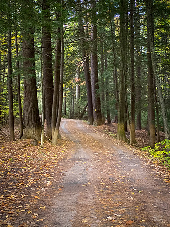 One of the roadbetween the trees - through the Colton Point State Park 10/12/19  ©John Schiller Photography