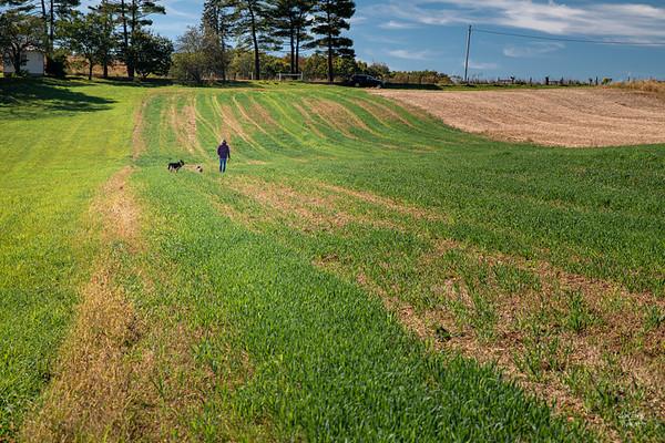 Farm Fields I