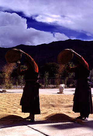 Women winnowing barley grains using baskets in the wind - near Lhasa Airport, TIBET