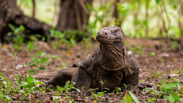 Indonesia, Komodo National Park