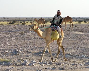 Camel herder in Qatar.