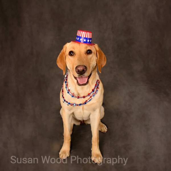 """Pet Portrait - """"Nellie on 4th of July"""""""