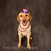 "Pet Portrait - ""Nellie on 4th of July"""
