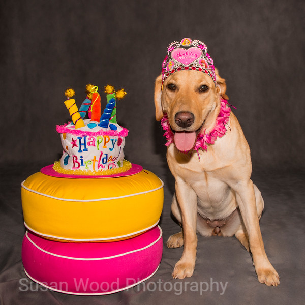 "Pet Portrait - ""Nellie's First Birthday"""