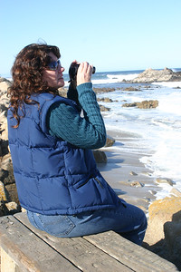 Scouting for sea otters