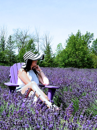 In the Lavender Field  / Canada